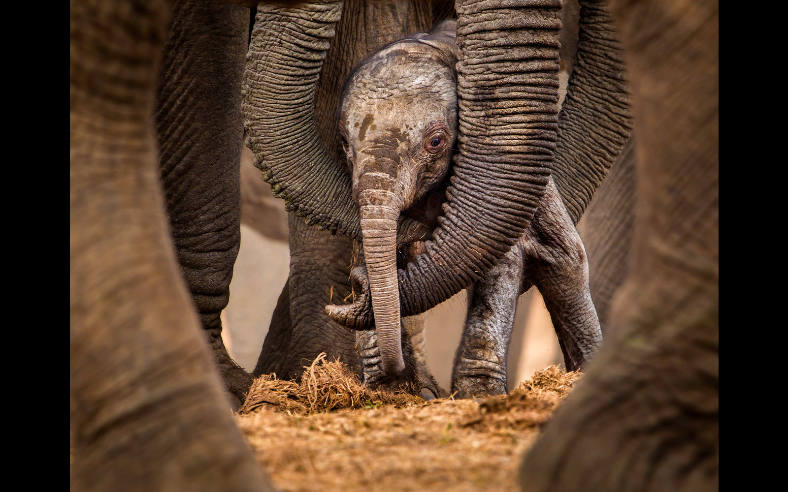 """Circles of protection"" at Addo Elephant National Park, South Africa ©John Vosloo"