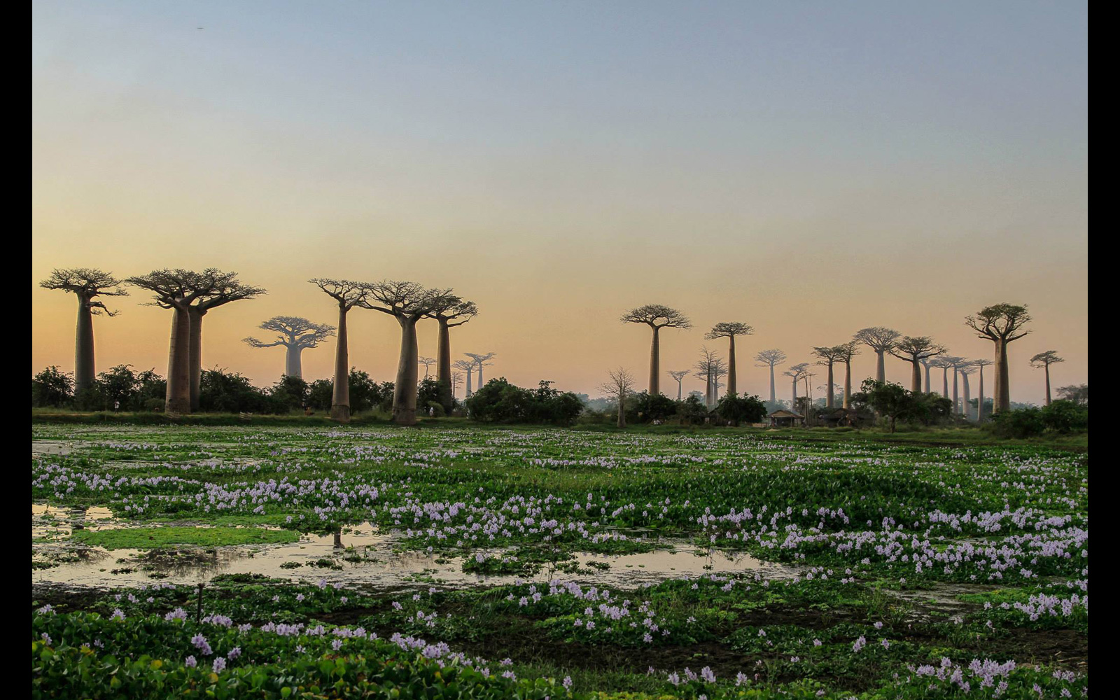 Moments before dusk at a swamp near the 'Avenue of the Baobabs' in western Madagascar © Pedro Ferreira do Amaral