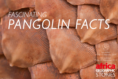 Fascinating Pangolin Factsi