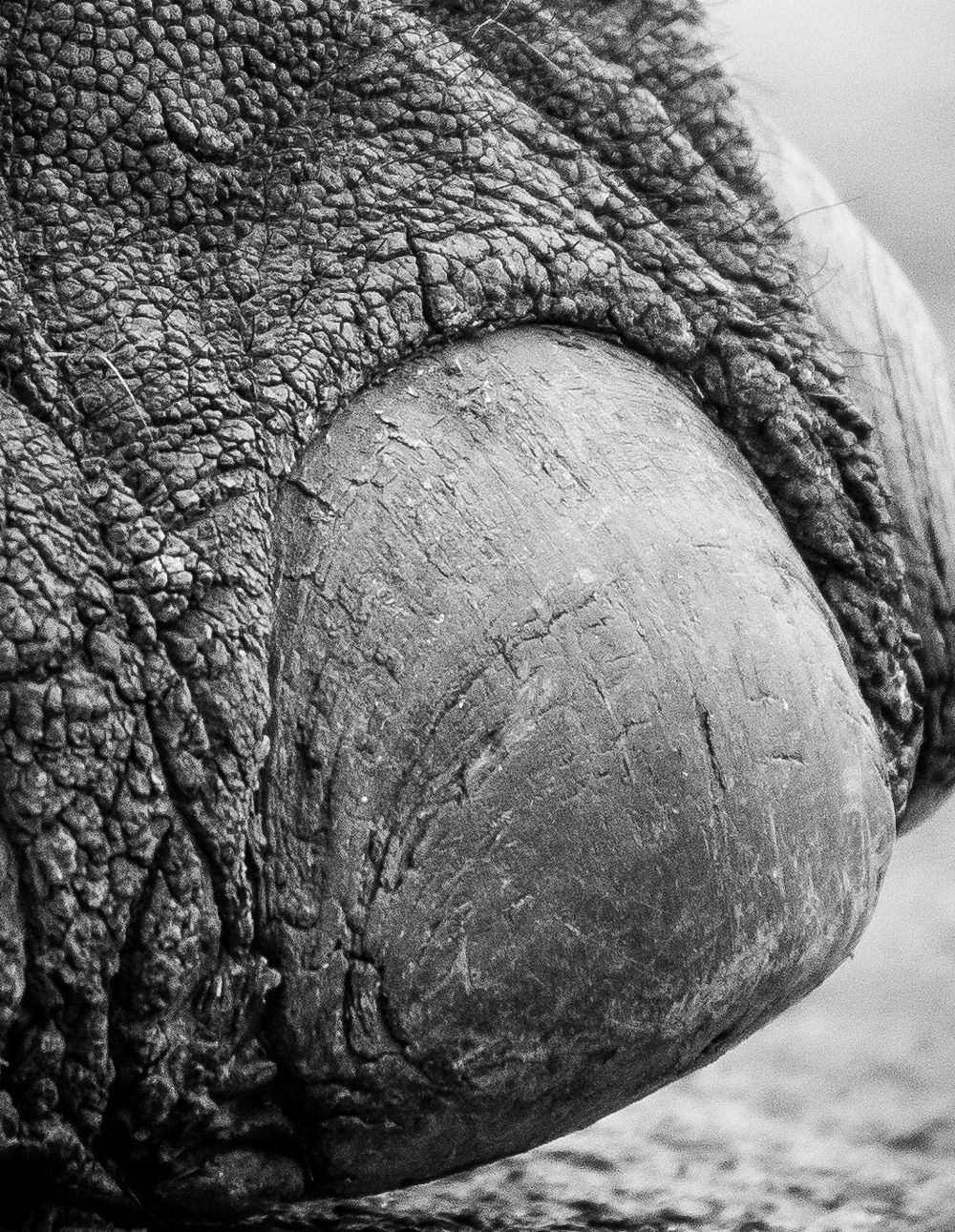 The toe of a giant ©Sally Hinton