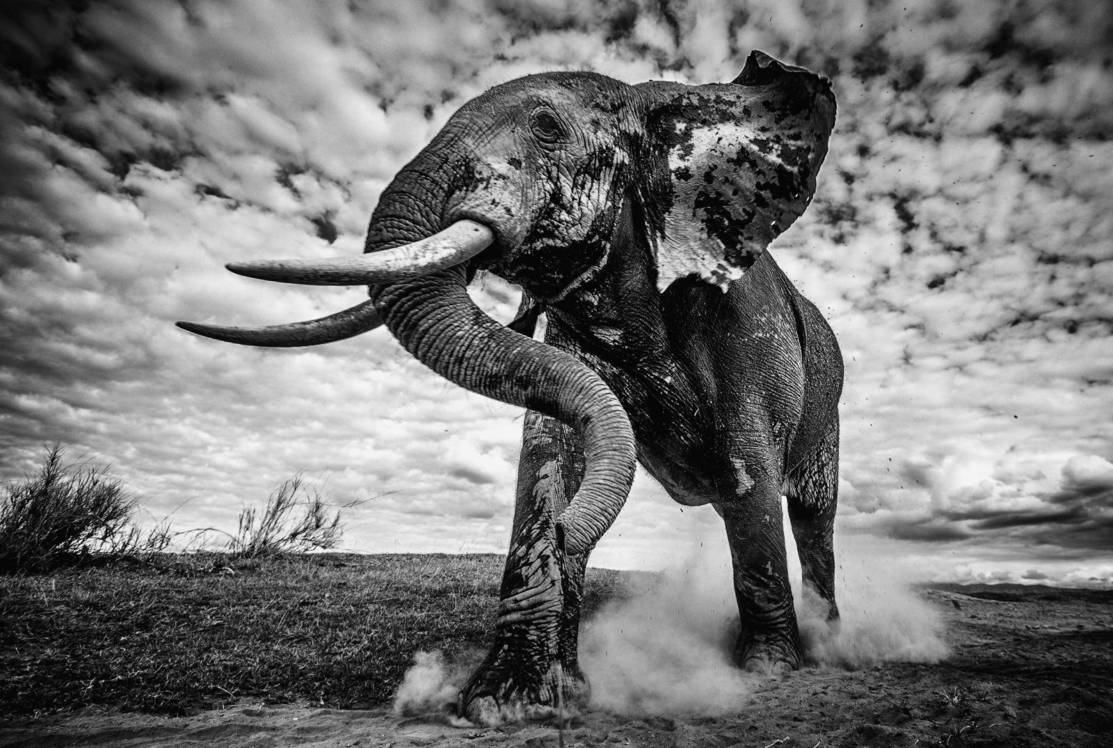 An elephant bull walks to the water in Amboseli National Park, Kenya ©Pieter Ras