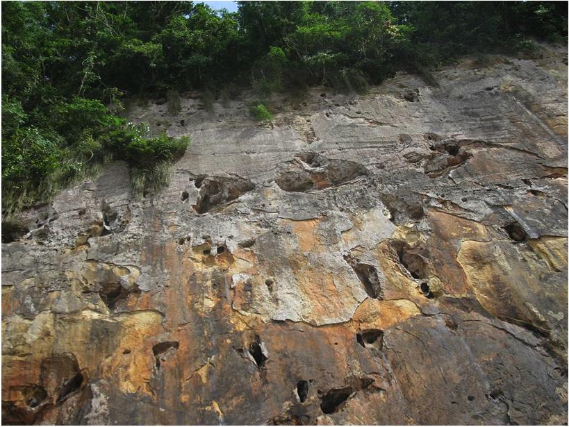 cliff-grey-parrots-nests