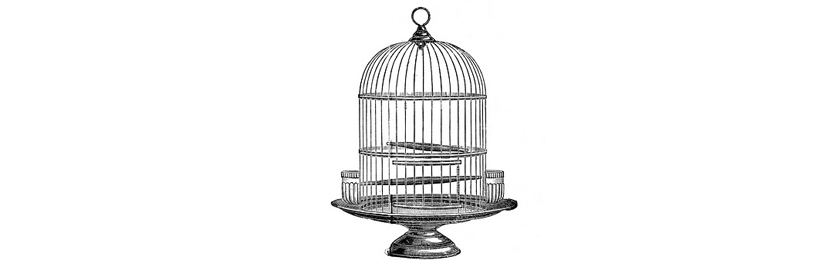 grey-parrot-bird-cage