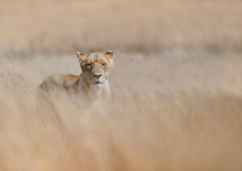 Female,-grass-©Mark-Drysdale