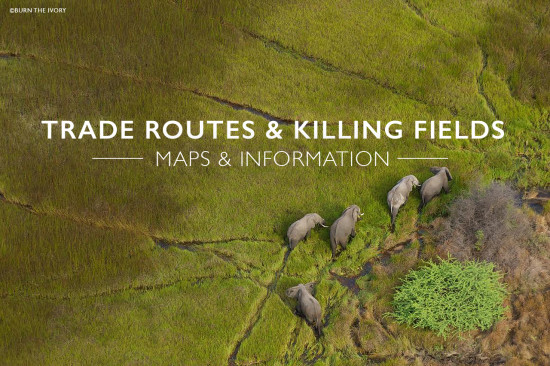 Ivory-trade-routes