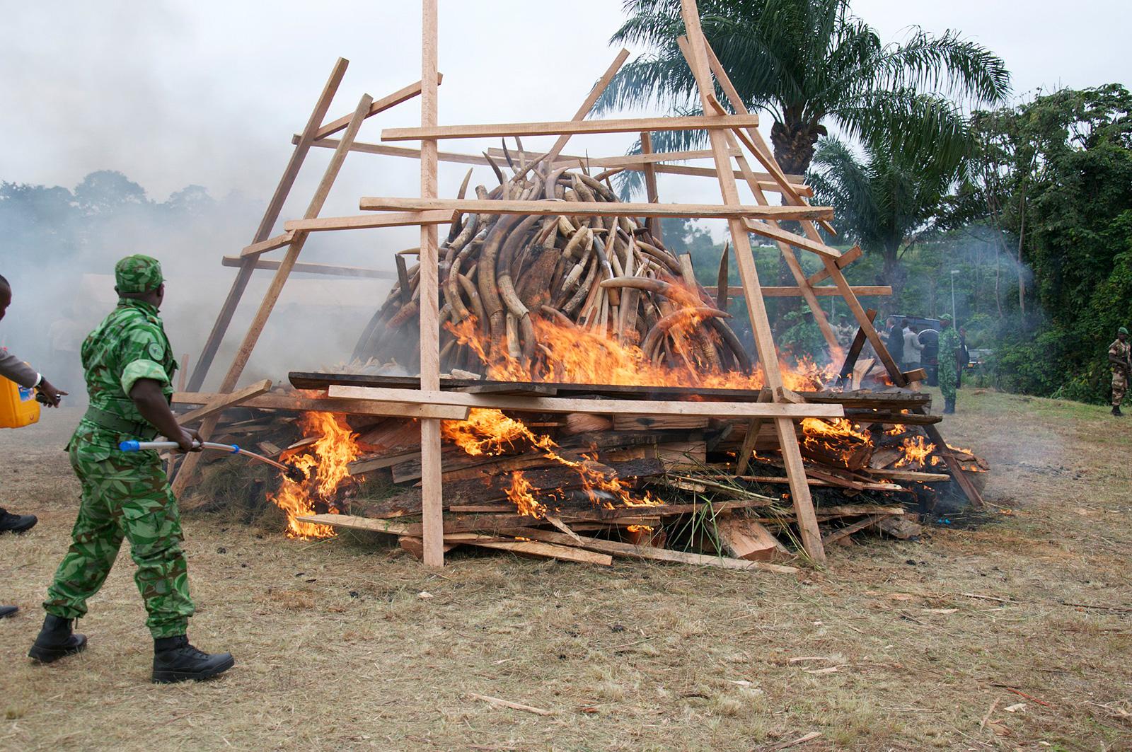 ivory-burn-gabon-africa-geographic-2