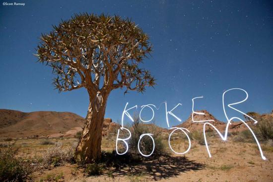 koker boom 2