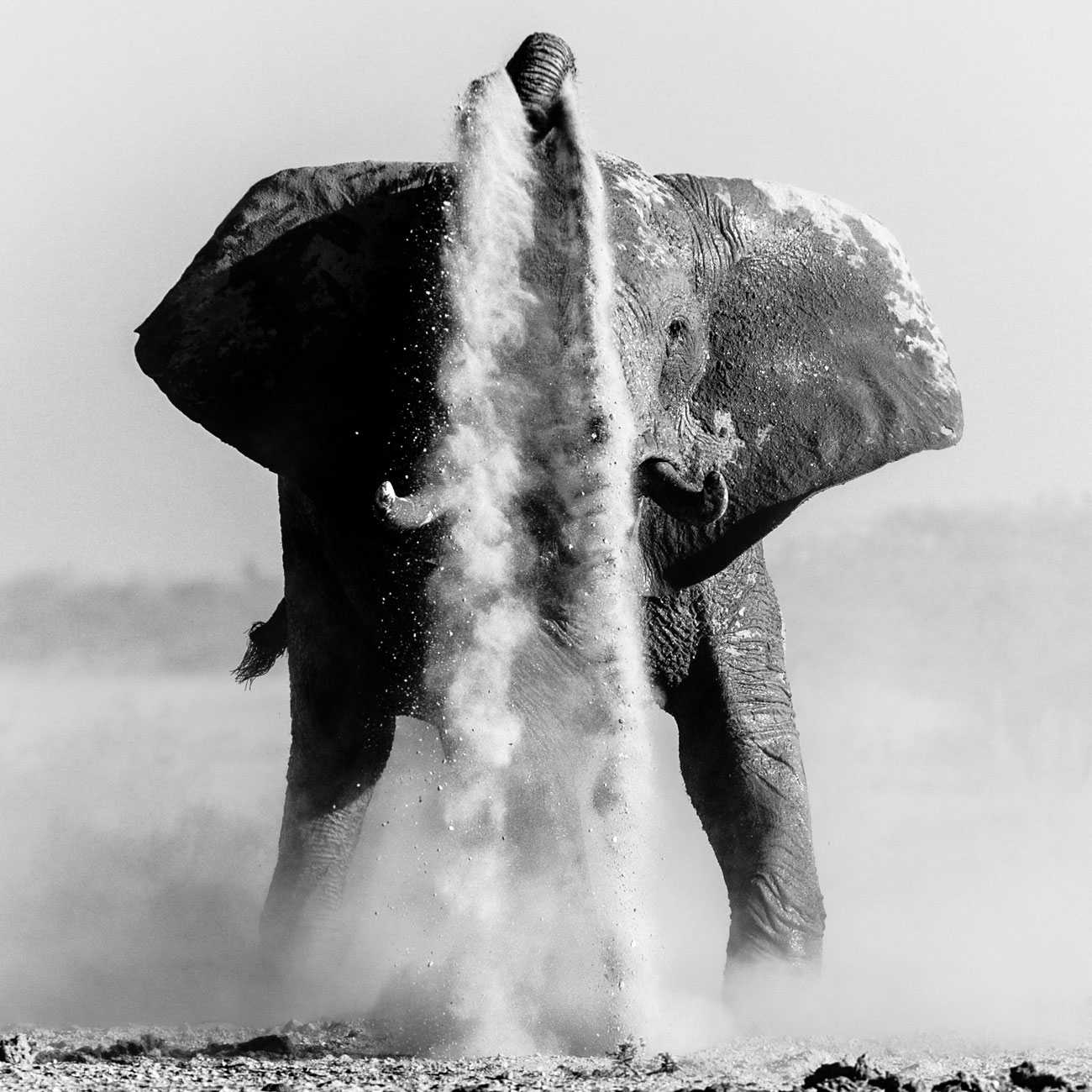 world-elephant-day-denis-roschlau