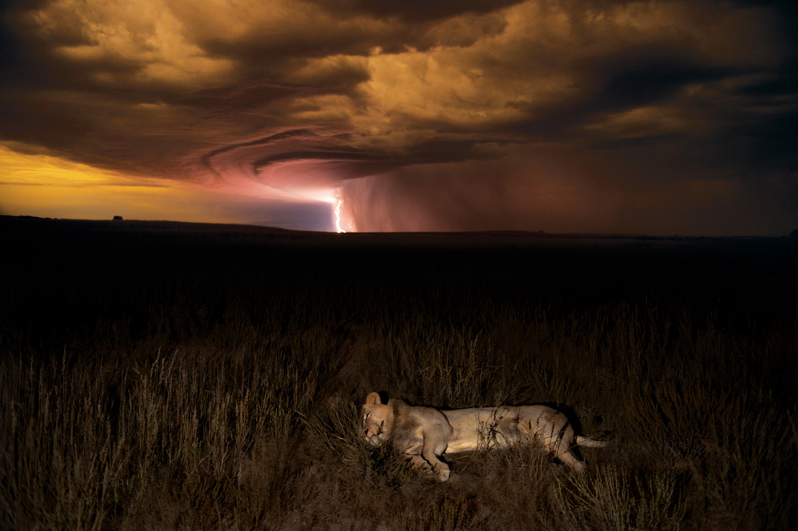 Hannes-Lochner-Kalahari-lion-lightning