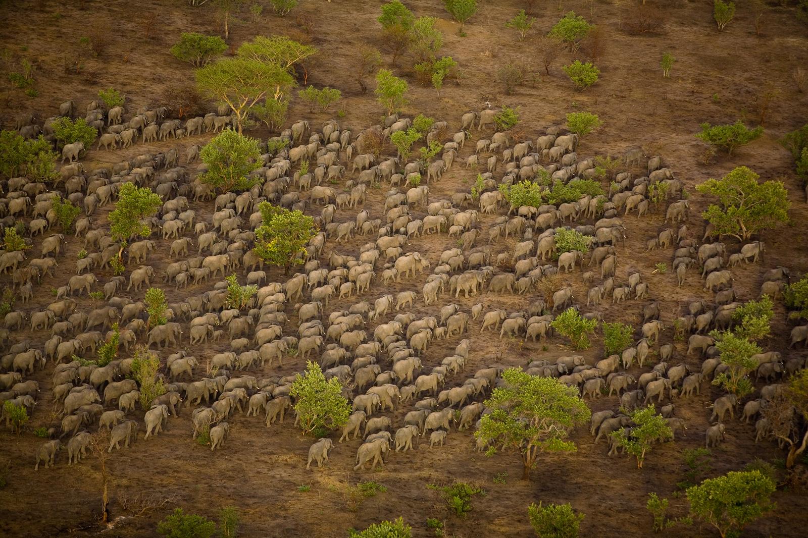 elephant-herd-zakouma