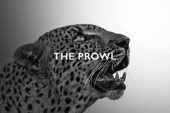 leopard gallery herader