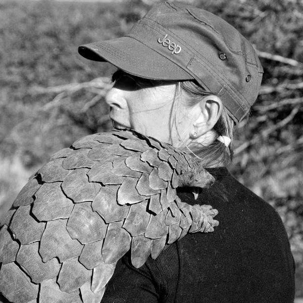 maria-diekmann-pangolin