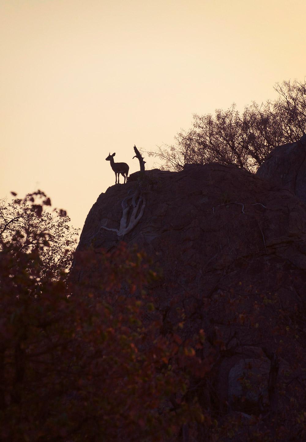 klipspringer-jeff-tyser-kerryn-lee-maggs-african-adventure