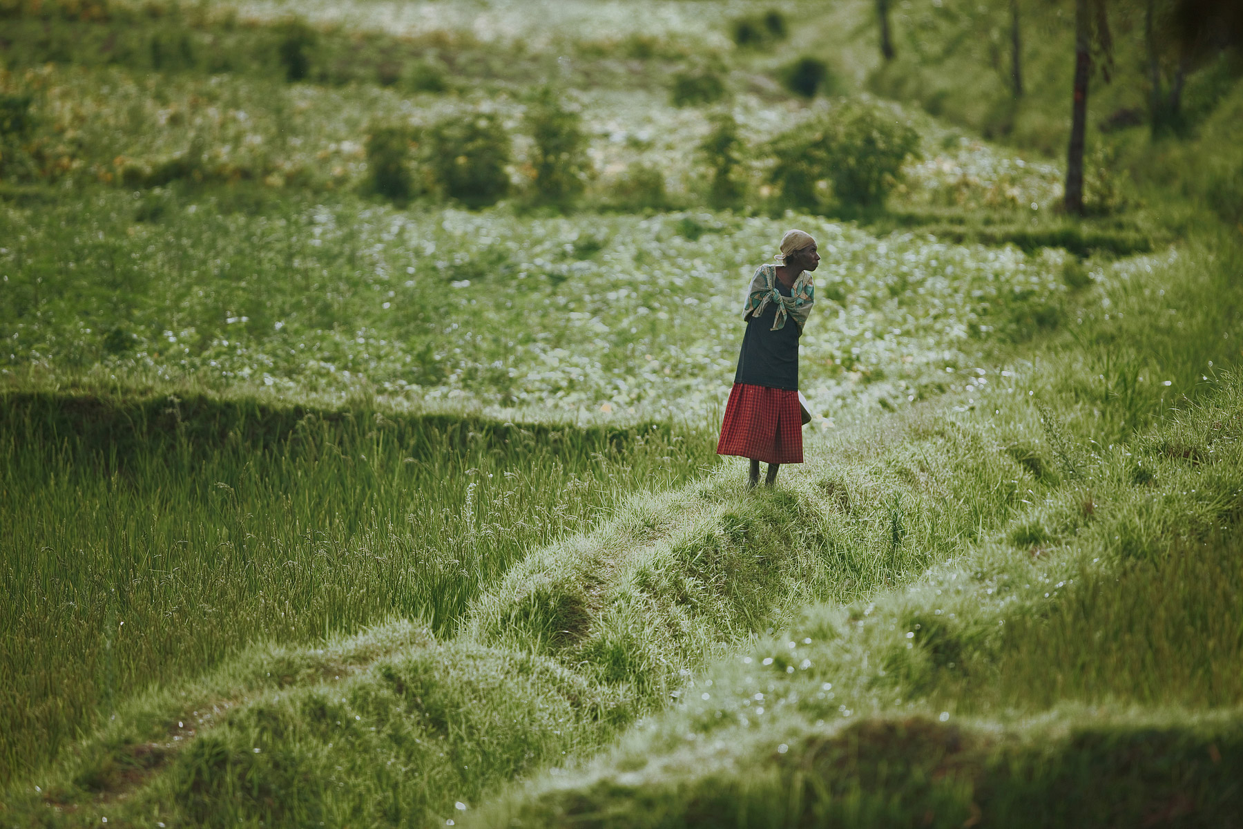 RWANDA_african_woman_standing_field_agriculture