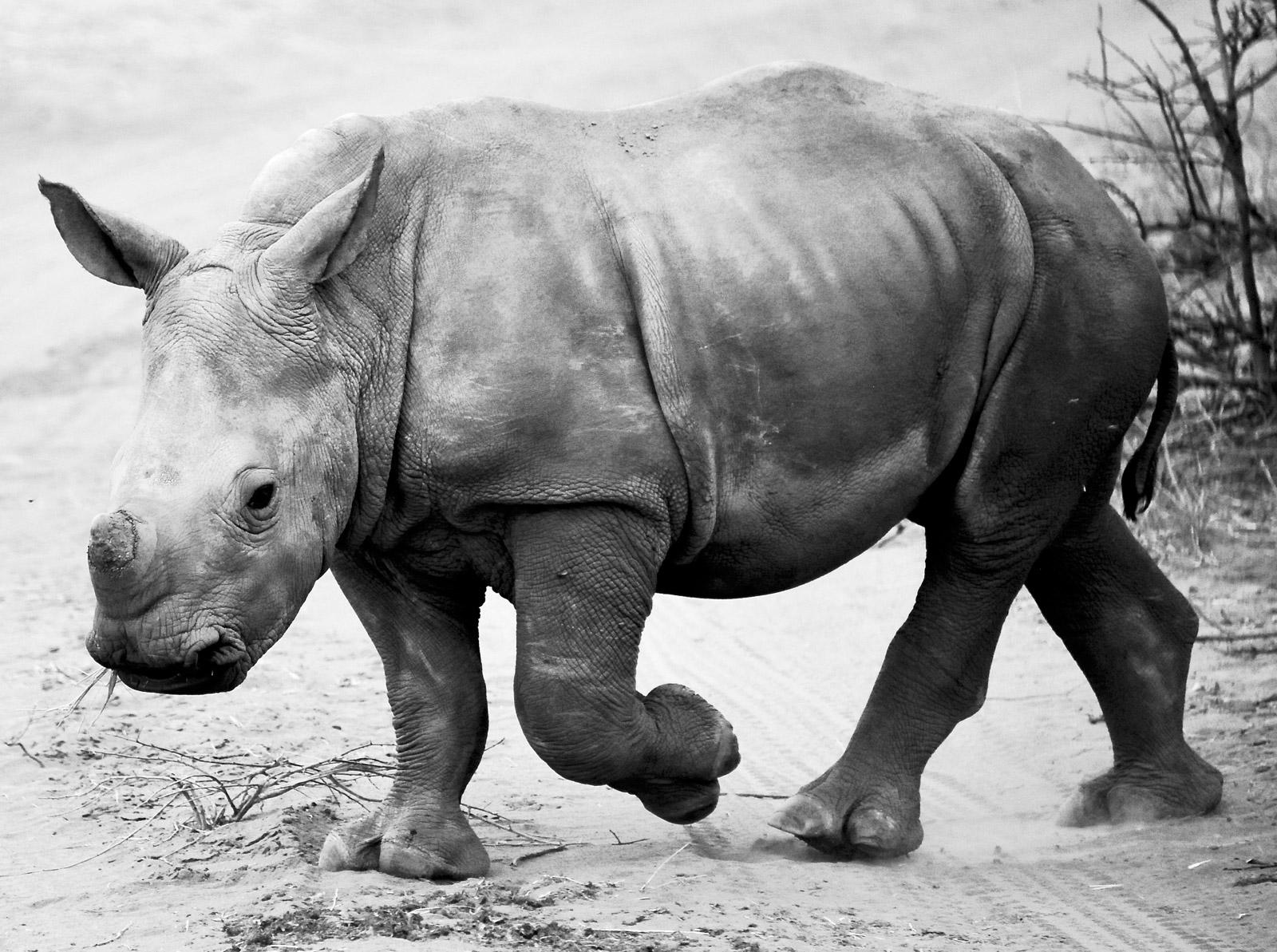 rhino trade debate south africa