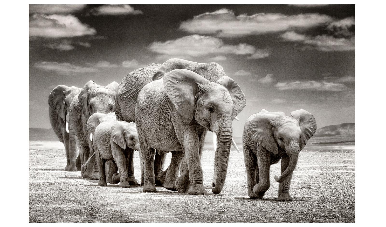 Thomas-Bossard-Amboseli-2
