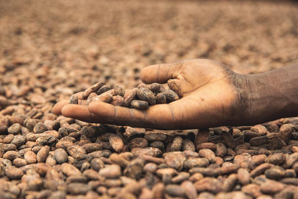 cocoa-beans-sao-tome-Artur-Cabral-CZ3B0459-Editar