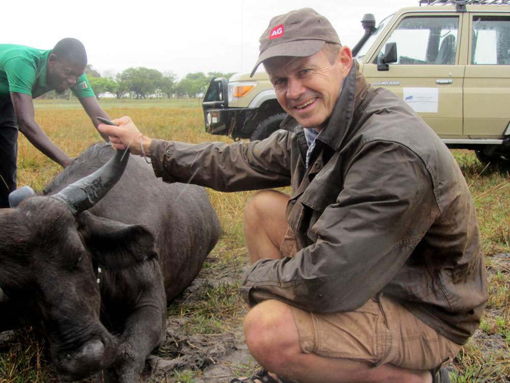 liuwa buffalo zambia