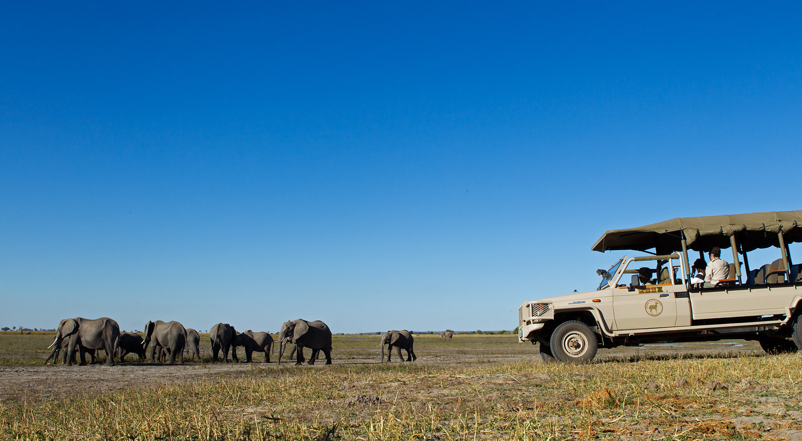 elephant-botswana-safari