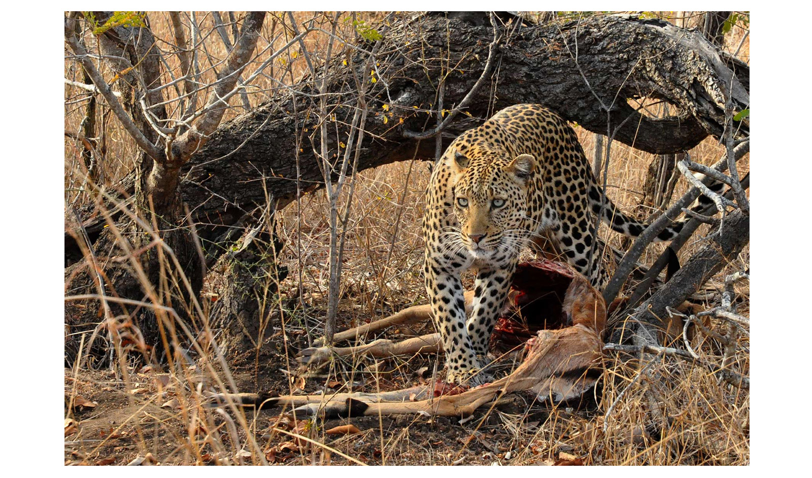 Marion-Gohier_Thornybush-Private-Game-Reserve