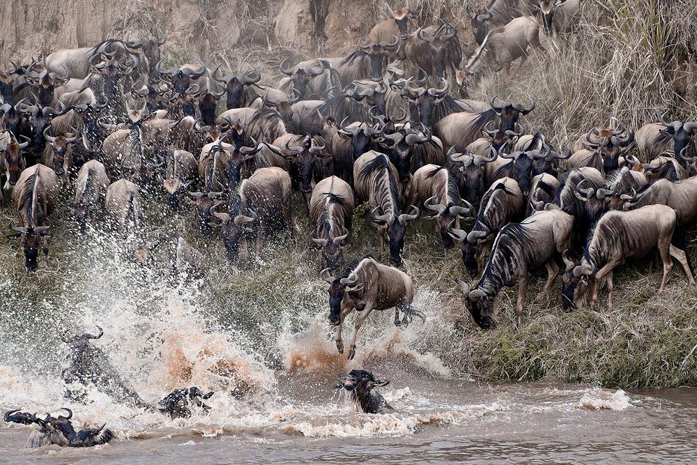 Wildebeest-migration-Yulia-Sundukova