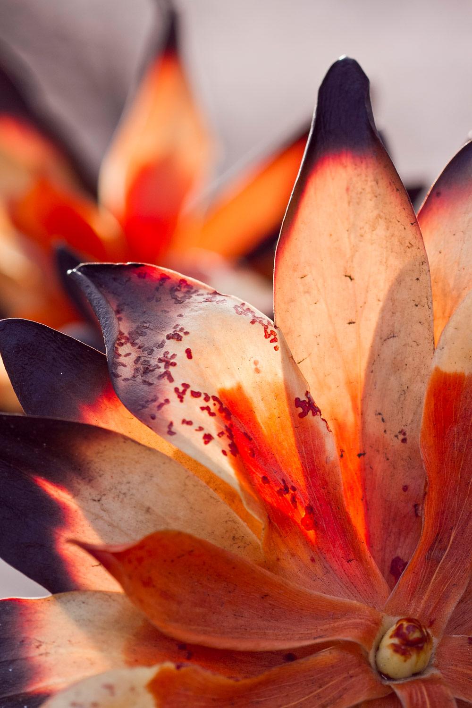 cape-fire-fynbos-christian-boix