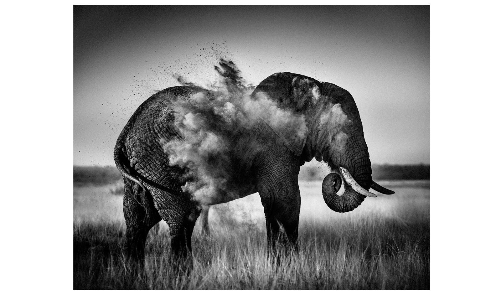 Elephant black and white dust