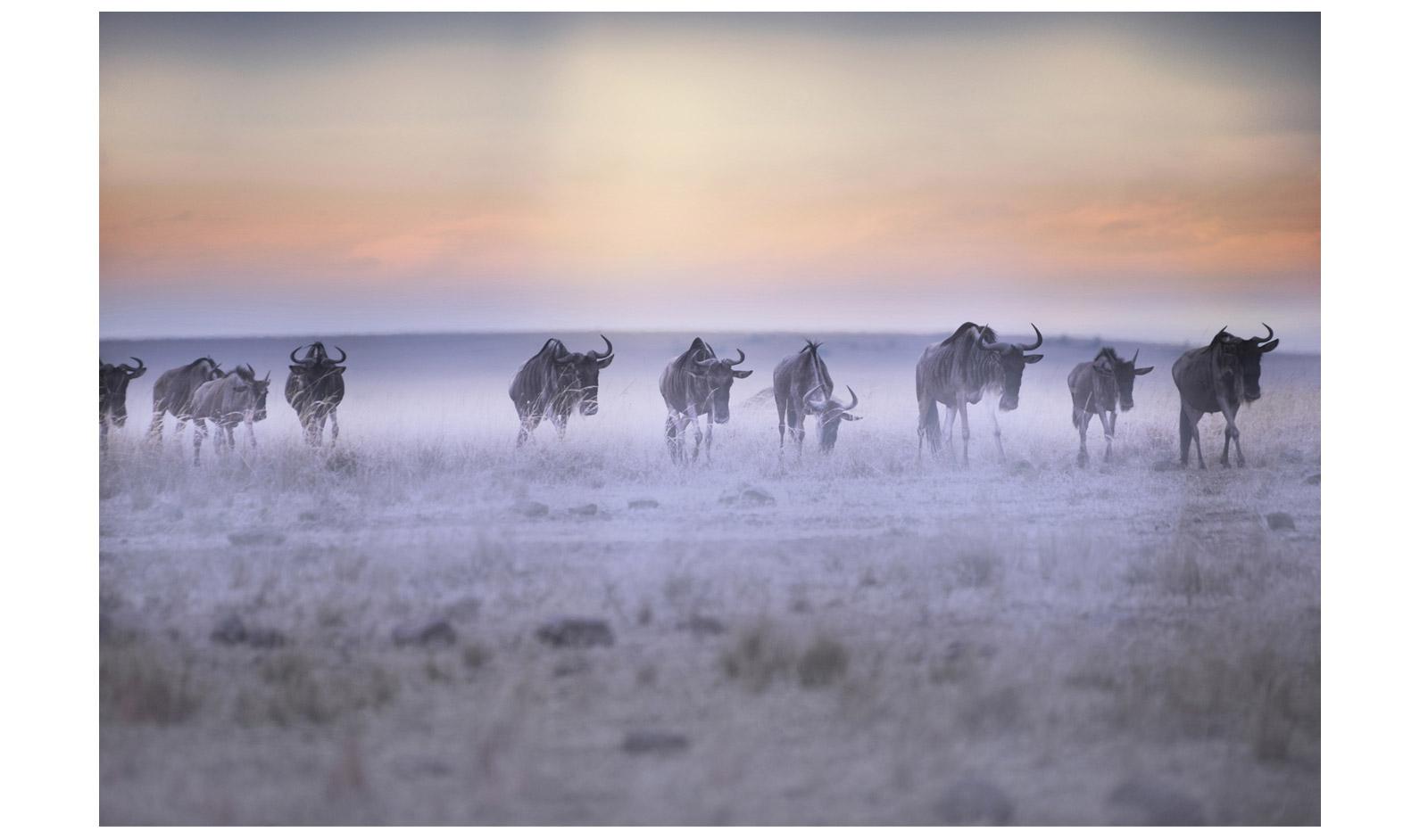 Shirli-Carswell-Early-Morning-Mara