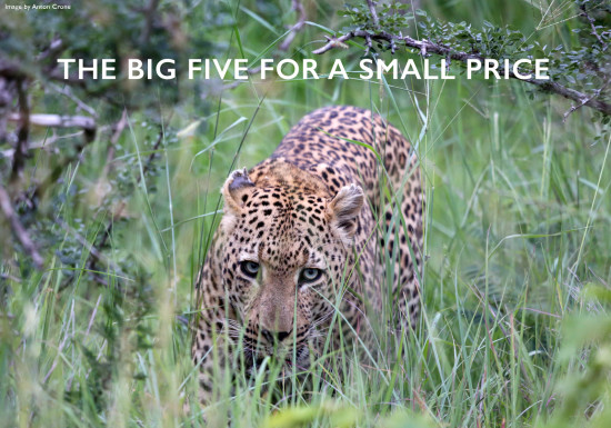 big-5-small-price-safari-cover 2