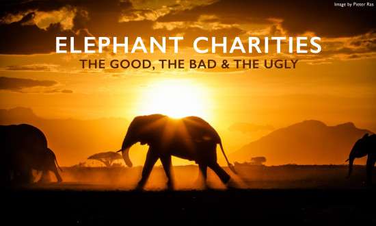 elephant-charities
