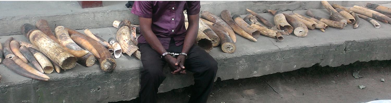 poacher handcuffed