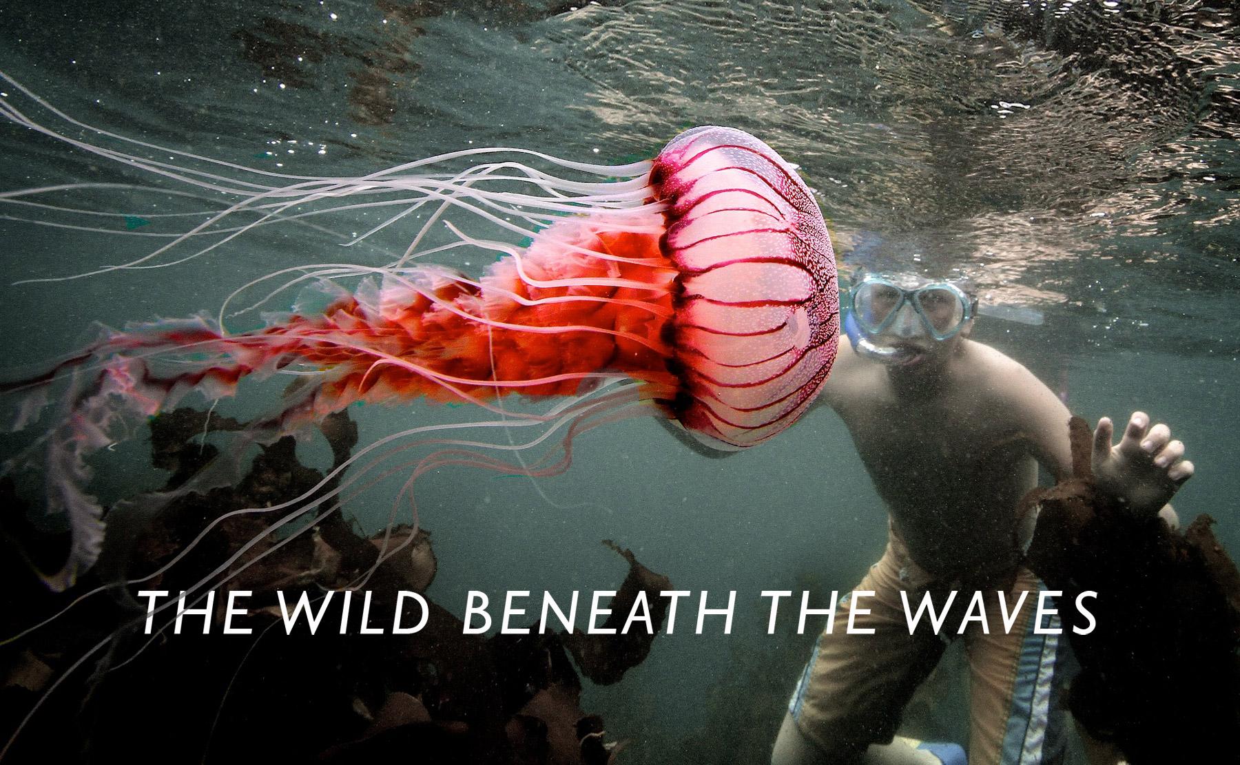 wild-beneath-waves-cover