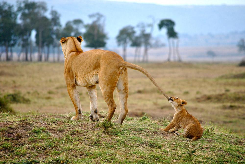 Maasai-Mara-Kenya-Tori-marsh
