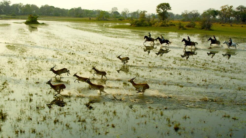 Okovango-horse-safari