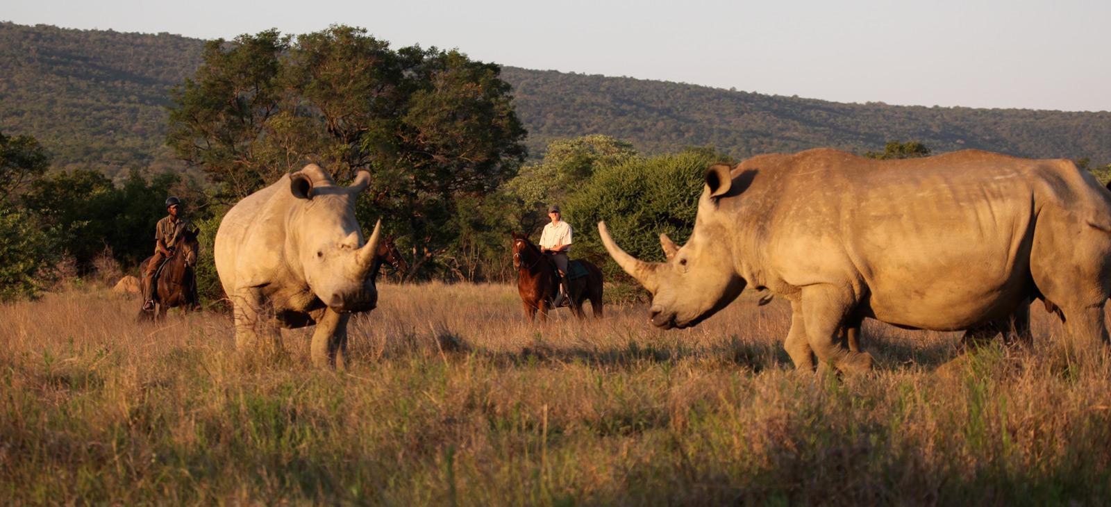 Riding-safaris-1600