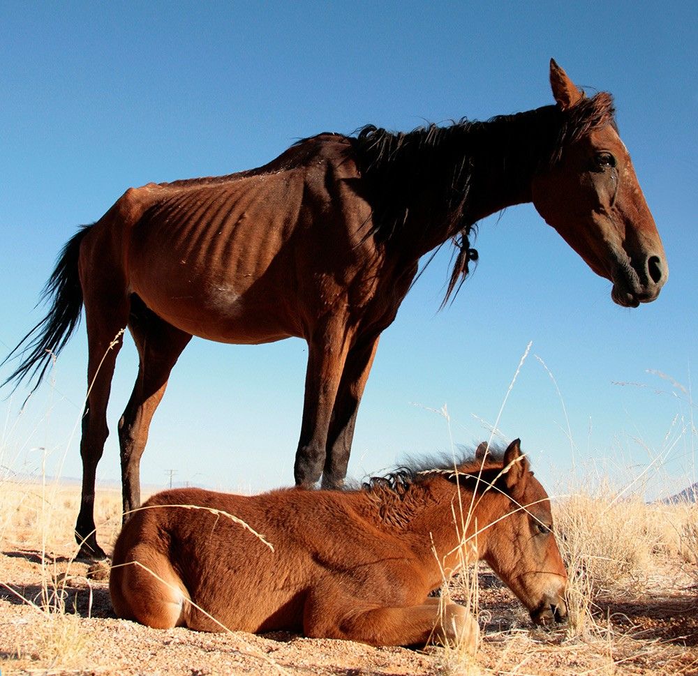horse-and-foal