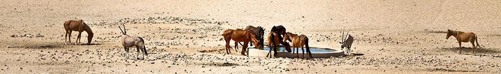 waterhole-namibia-