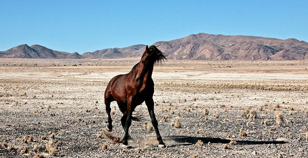 wild-horse-namibia-3