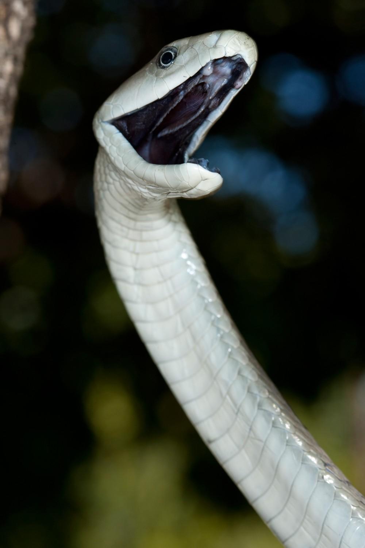 Snakebite! - Africa Geographic Magazine