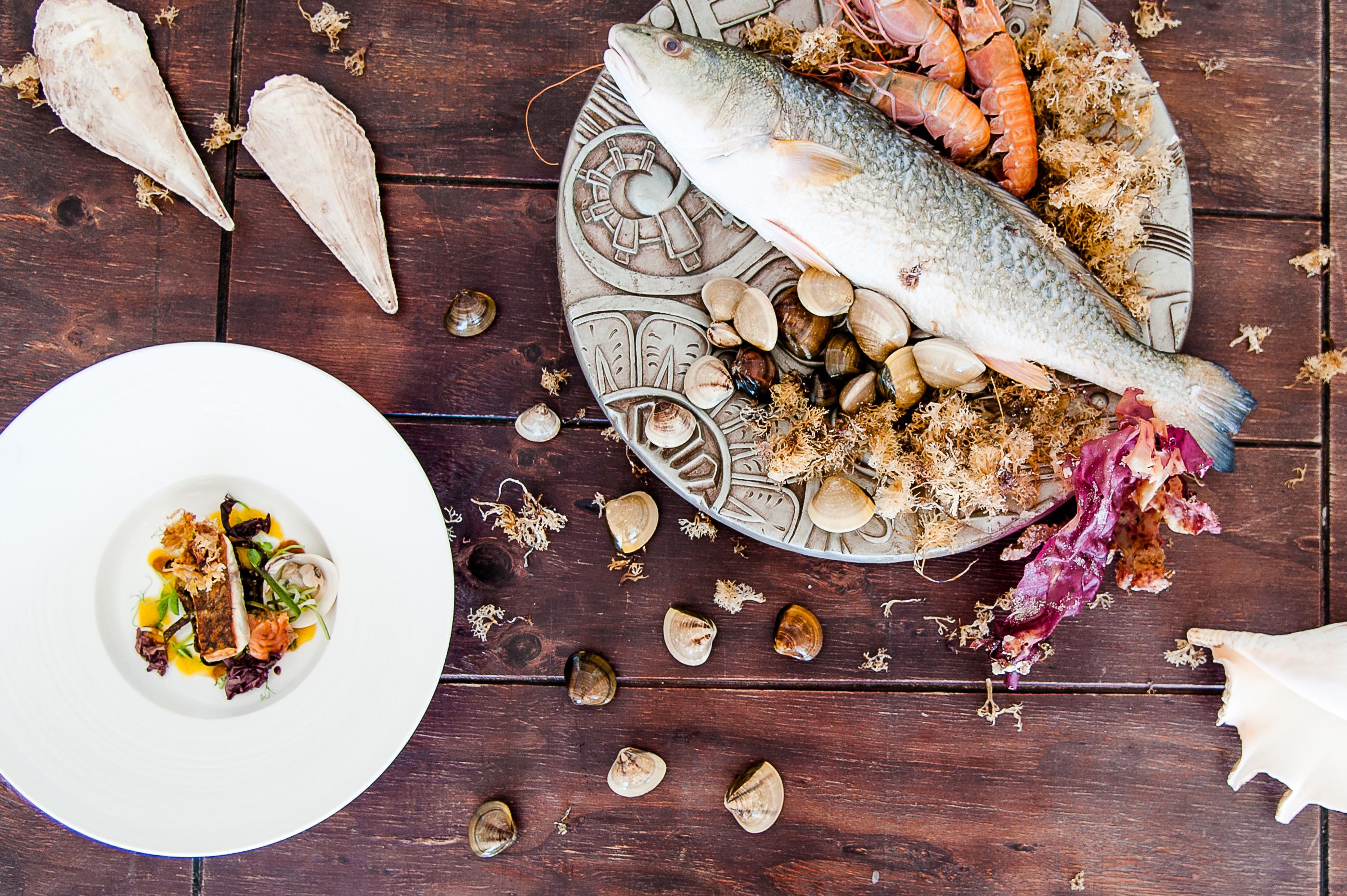 Nicole-Krummacher-flagship-fish-plate
