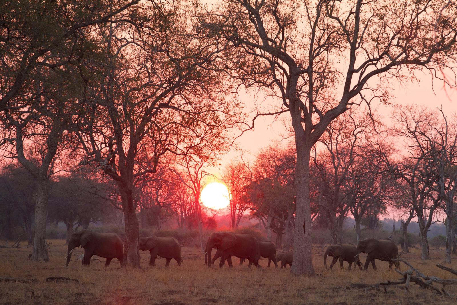 South-Luangwa-027-(Mfuwe-Elephants)