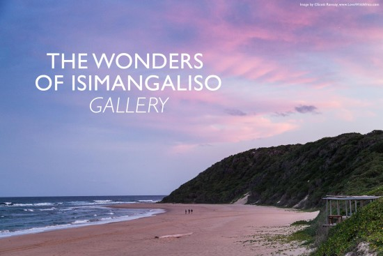 the-wonders-of-isimangaliso-wetland-park-scott-ramsay-lovewildafrica