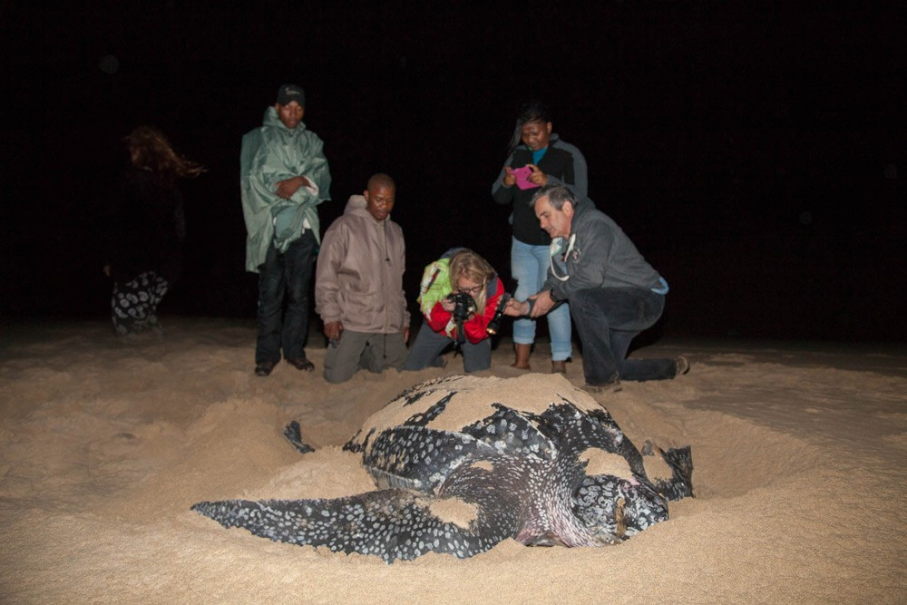 Don't miss turtle nesting season ©Scott Ramsay, LoveWildAfrica.com