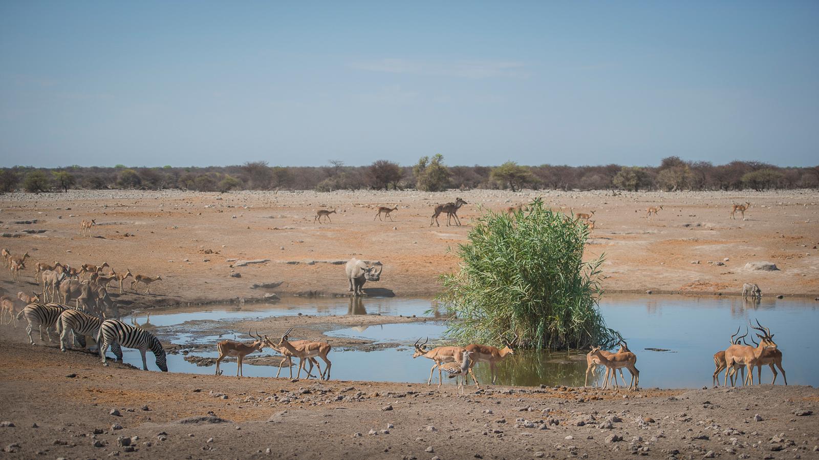 Life at the life-giving Chudop waterhole ©Anja Denker
