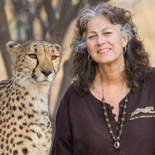 dr-laurie-marker-cheetah-conservation-fund