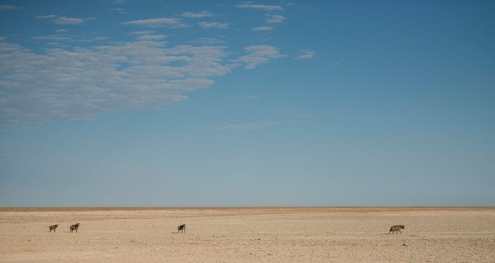 Hyenas in the pan ©Anja Denker