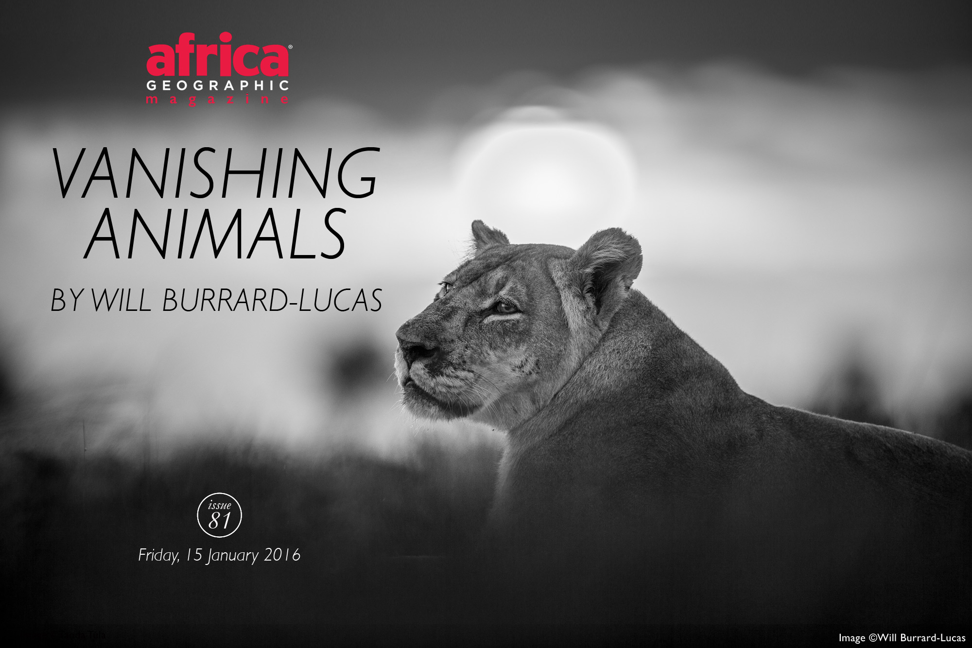 vanishing-animals-issue-81-will-burrard-lucas