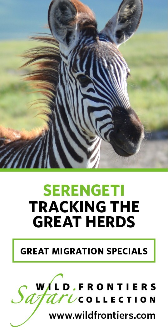 wildfrontiers-great-migration-special
