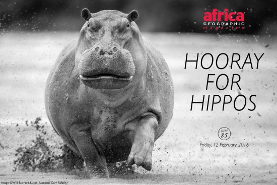 hooray-for-hippos-issue-85