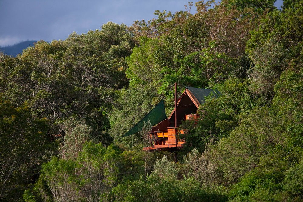 louries-nest-treehouse-teniqua-treetops